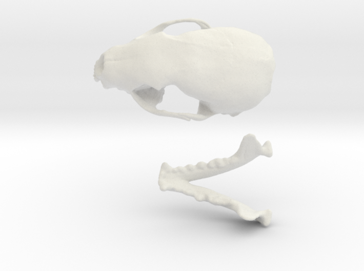 Skull of a stone marten 3d printed