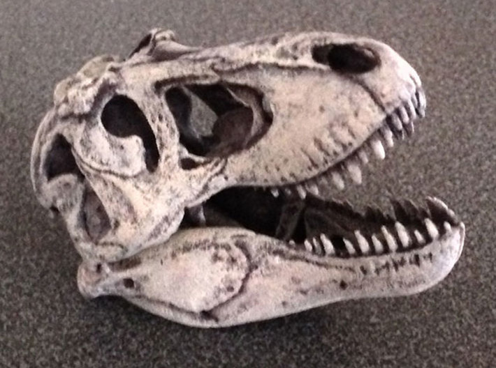 Museum quality T. rex skull - with moving jaw 3d printed first ever pain job