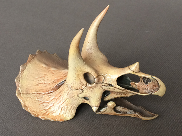 Triceratops - dinosaur skull replica 3d printed Choose from 4 scales