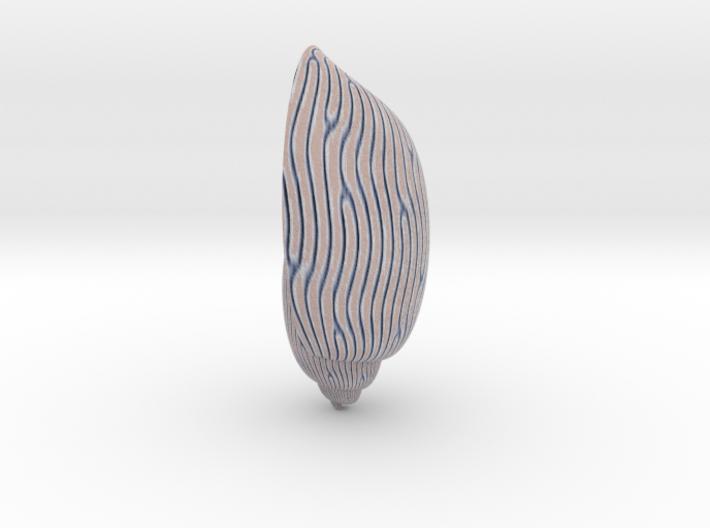 Amoria Undulata 3d printed