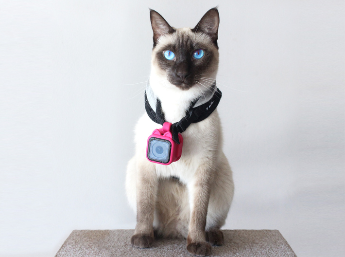 Kitty Cam - Gopro Mount for Pets 3d printed The Kitty Cam fits on any harness or collar