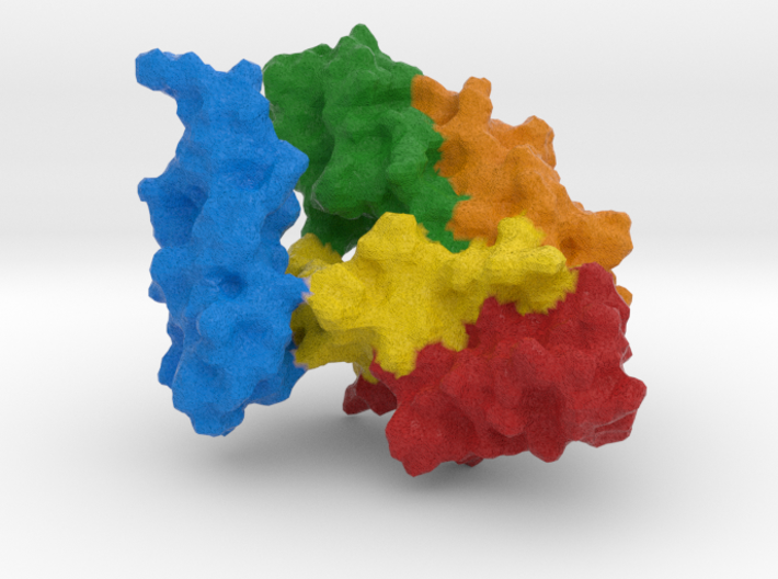 Heat Shock Protein 3d printed