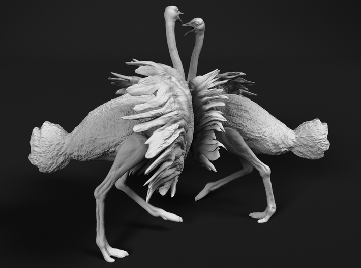 Ostrich 1:16 Fighting Pair 3d printed