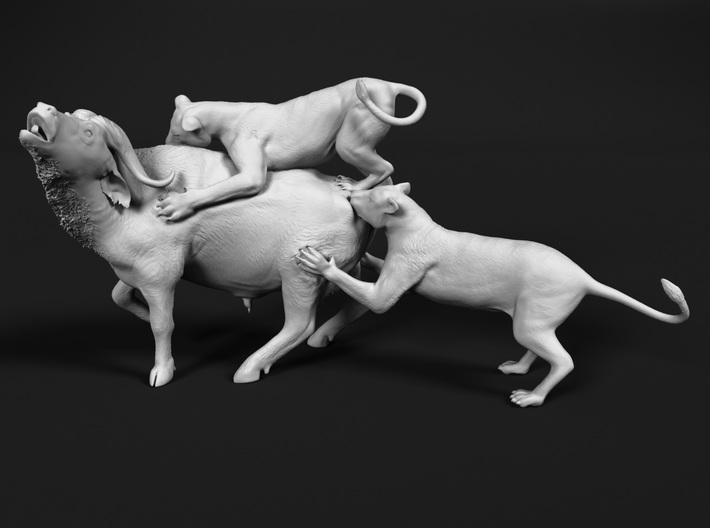 Cape Buffalo 1:76 Attacked by Lions 3d printed