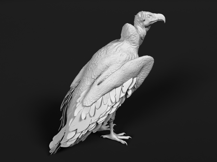 Lappet-Faced Vulture 1:25 Standing 3d printed