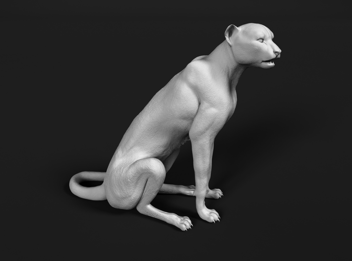 Cheetah 1:87 Sitting Male 3d printed