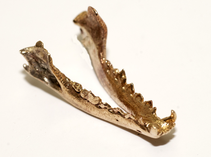 Fox Mandible for articulated skull 3d printed