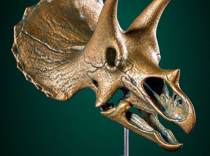Triceratops - dinosaur skull replica 3d printed Example shown with faux bronze finish