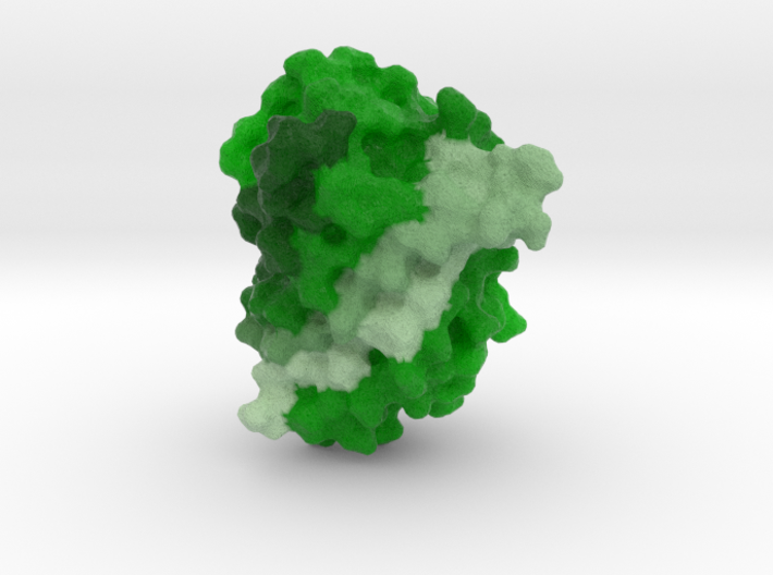 Green Fluorescent Protein (GFP) 3d printed
