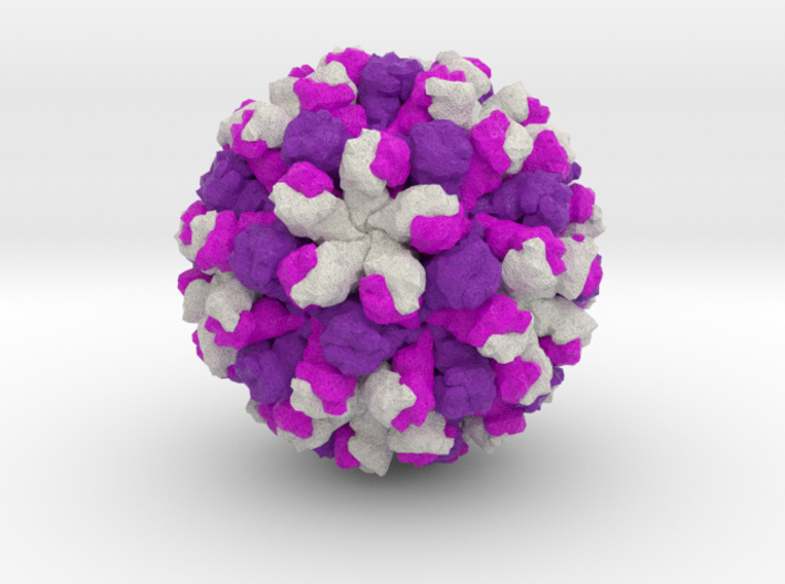 Rabbit Hemorrhagic Disease Virus 3d printed