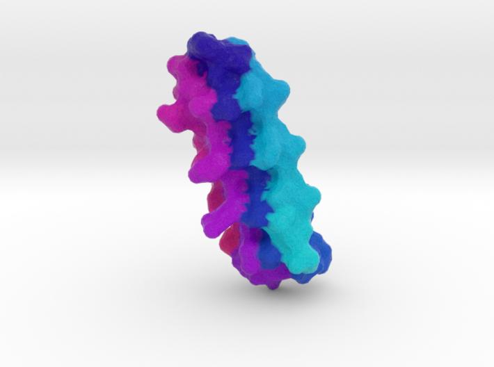 Snow Flea Antifreeze Protein 3d printed
