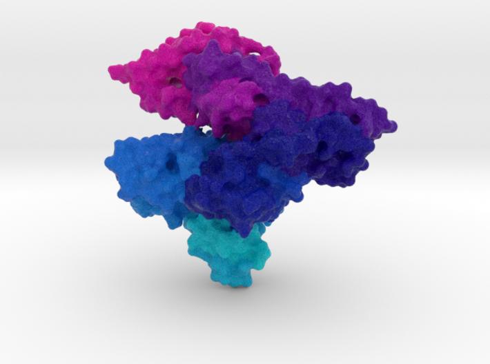 Human Serum Albumin 3d printed