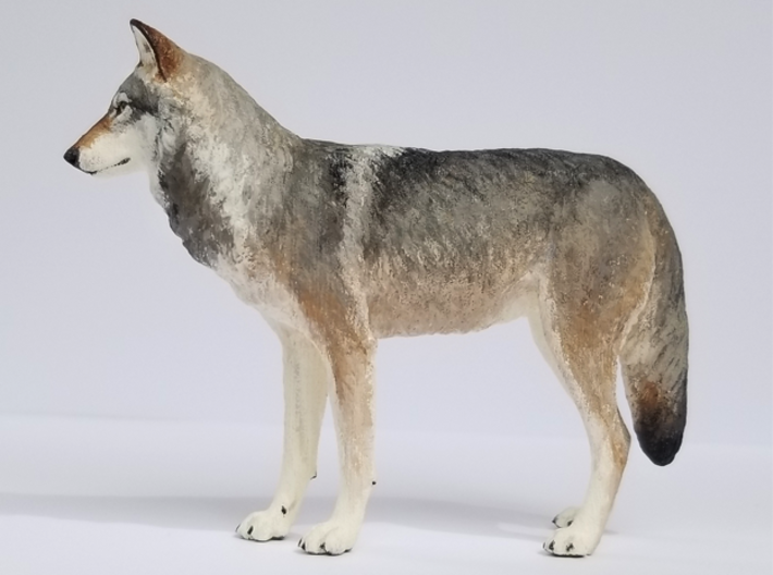 North American Gray Wolf 3d printed Model prints in solid color. Shown here painted in acrylics.