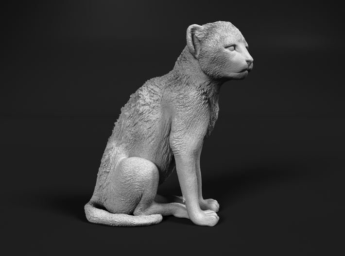 Cheetah 1:9 Sitting Cub 3d printed