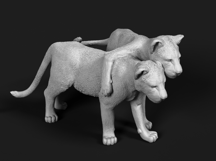 Lion 1:12 Cubs distracted while playing 3d printed