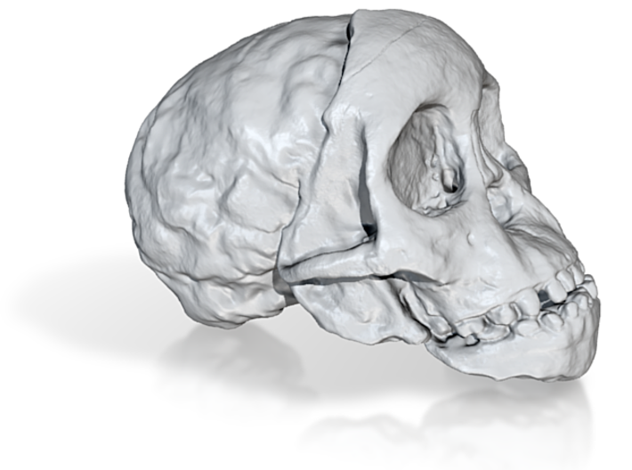 RadioLab Taung Child Skull Via Shootdigital 2014.0 3d printed