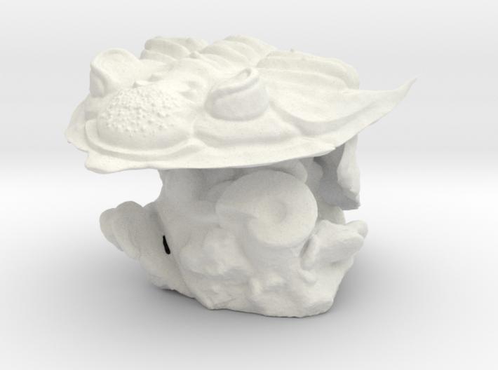 Trilobite -Huntonia Lingulifer with Ammonite stand 3d printed