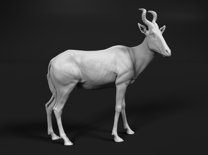 Red Hartebeest 1:45 Standing Male 3d printed