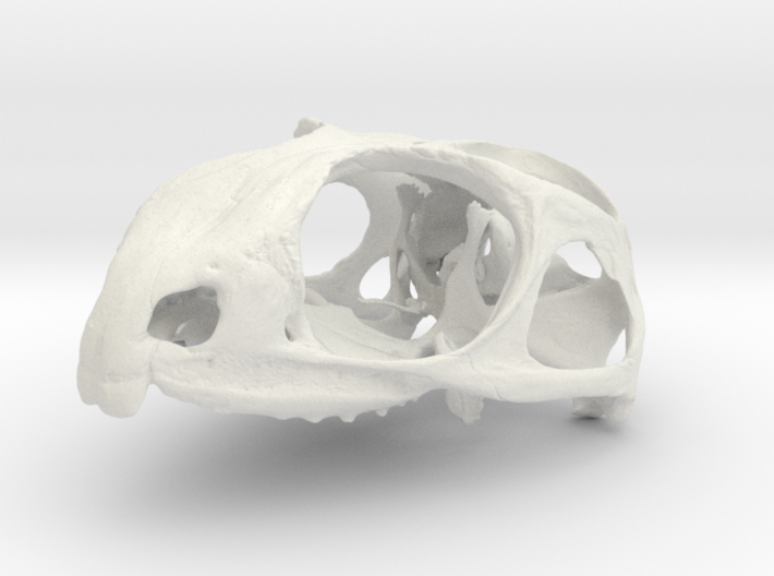 Sphenodon punctatus 3d printed