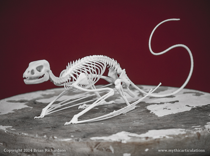 Wyvern Skeleton 3d printed