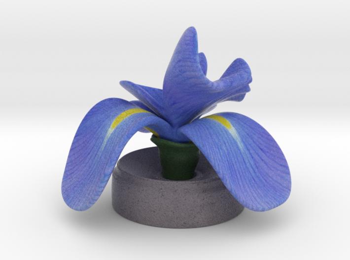 Blue Iris in concrete 3d printed