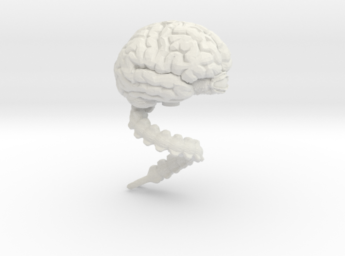 Brain, Large 3d printed