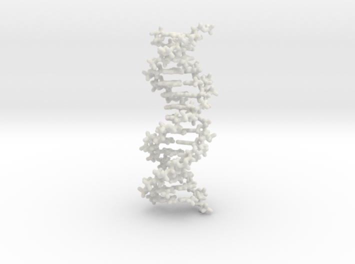 DNA double helix, stick model, 2 separable chains 3d printed