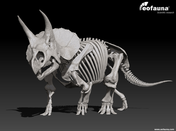 Triceratops horridus skeleton 1:20 scale 3d printed 3D Triceratops skeleton by EoFauna, 2014