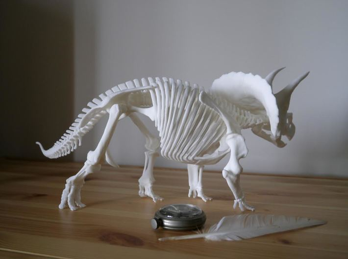 Triceratops horridus skeleton 1:20 scale 3d printed
