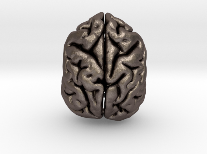 Sloth Bear Brain 3d printed
