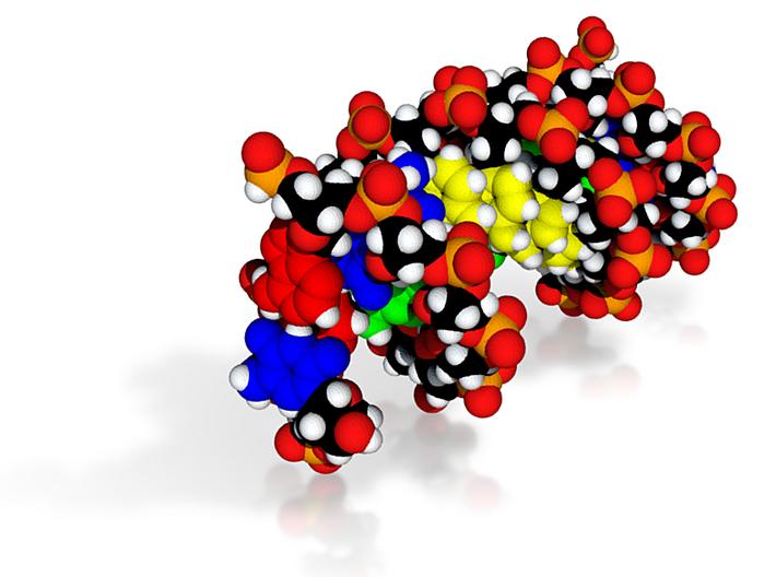 """DNA Molecule Model """"Megan"""", Size = Large 3d printed"""