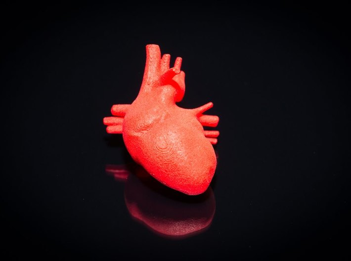 Anatomical Heart Hanger Pendant 3d printed