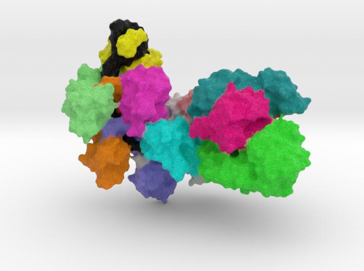Immune cascade complex 3d printed