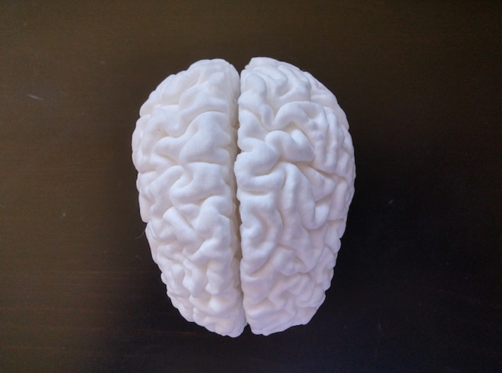 The right hemisphere of the brain - half scale 3d printed