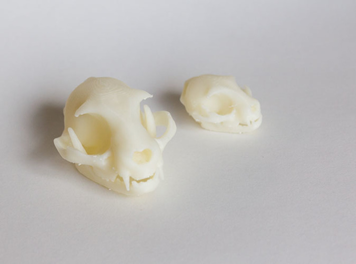 """Mid-Sized Cat Skull Sculpture 3d printed Standard and mini sized models. Printed on """"MakerBot: The Replicator"""" at the local college."""