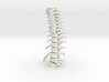 Thoracic Spine - Fracture (SKU 019) 3d printed