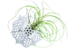 Radiolaria Platonica Planter 3d printed Tillandsia species: T. diaticha minor