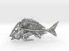 Littlehead Porgy Fish Skeleton Pendant 3d printed