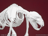 Nandi Bear Skeleton 3d printed