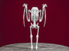 Mothman Skeleton 3d printed