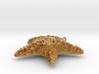Starfish EtchText 3d printed