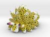 Costasiella Kuroshimae_yellow 3d printed