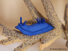Lani the Nudibranch 3d printed Blue Strong & Flexible Polished