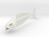 Flexible Fish Skeleton 3d printed