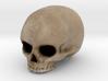 Skull in Color 3d printed