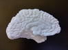 The left hemisphere of the brain - full scale 3d printed