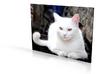 Gubbio Cat - flat - 4in 3d printed